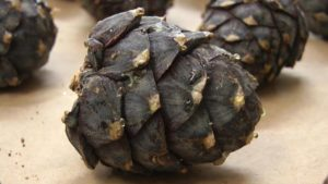Make your own swiss pinecones infusion