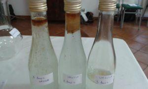 Anise oil distilled with the Leonardo: yield