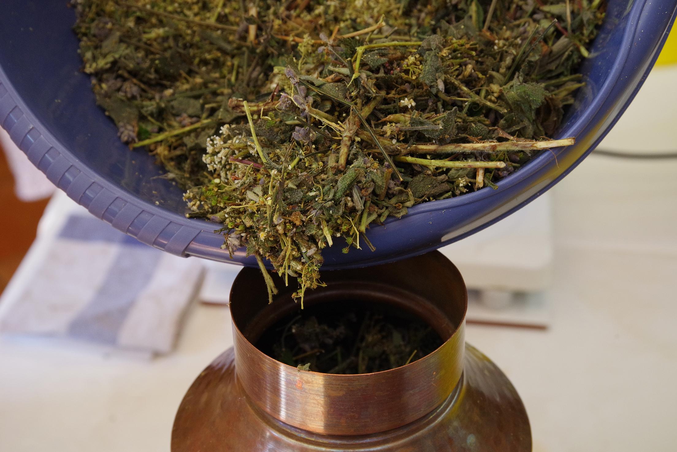 In der Destille Leonardo haben wir folgende Pflanzen destilliert: Mädesüß, Dost, Salbei, Schafgarbe und Lavendel.