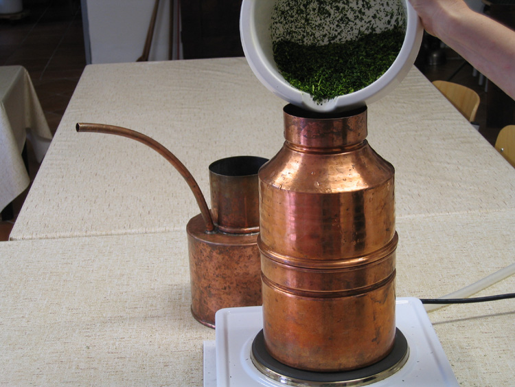 Distilling Essential Dill Oil with the Leonardo Still