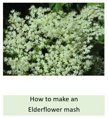 How to make an elderflower mash